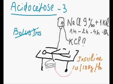 Insuline biorythme quotidien