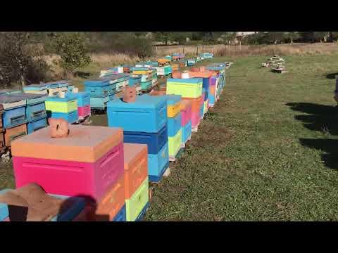 Проблемы пчеловодства. Протрав.
