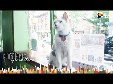 Cat Runs A Real Estate Office In Brooklyn | The Dodo City Pets