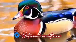 New WhatsApp Status in natural animals whatsapp status video