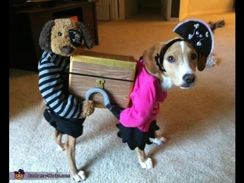 Dog wearing funny costumes - funny video compilation cat and dog wearing halloween costumes 2015