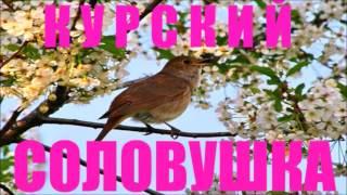 Курский Соловей - Nightingale Singing