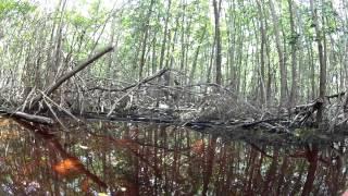preview picture of video 'Celestun Foresta di Mangrovie'