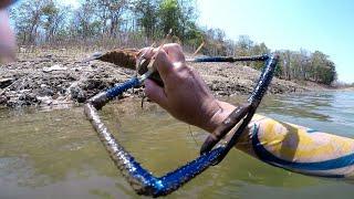 ดำจับกุ้งแม่น้ำตัวใหญ่มากๆด้วยมือเปล่าๆ