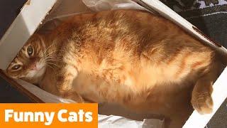 Funniest Cute Cats   Funny Pet Videos