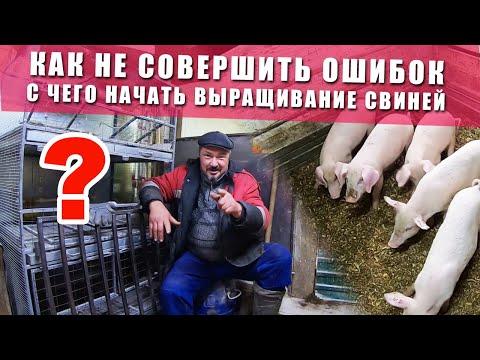 , title : 'Выращивание свиней в домашних условиях | C чего начать разводить свиней | ЦЕННАЯ ИНФОРМАЦИЯ
