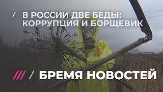 Что общего у Путина и борщевика, и как сорняк может спасти Россию?