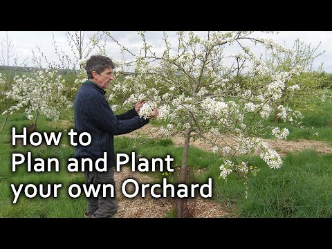 How to Plan and Plant your own Orchard