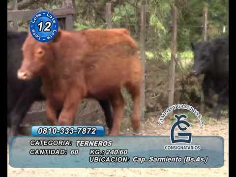 Lote Machos - Cap  Sarmiento