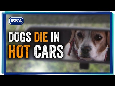 Dogs die in hot cars. Remember: 'not long' is too long