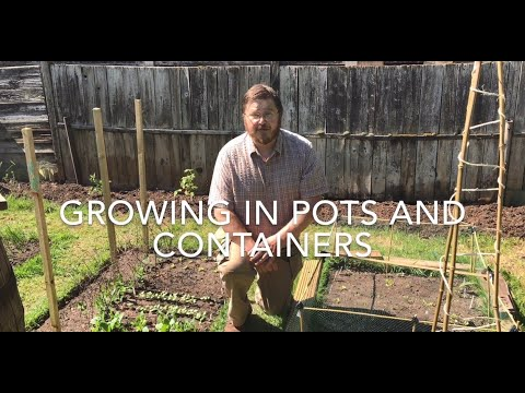 Growing vegetables and herbs in pots and containers