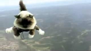 коты-парашютисты.flv