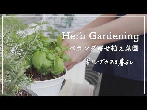 , title : '初めてのベランダ菜園、ハーブの寄せ植えづくり // ミントやバジルなど🌿