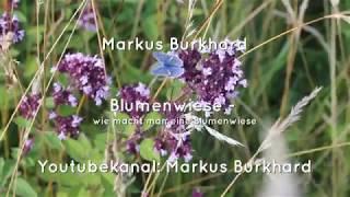 Blumenwiese - wie lege ich sie selbst an