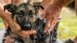 How to Get Rid of Fleas on Puppies the Natural Way