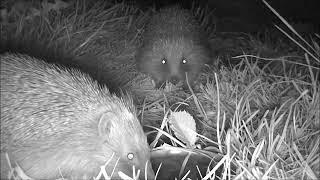 Wildlife Trail Camera - 24.4.2019