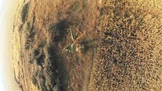 Onepack FPV freestyle practice