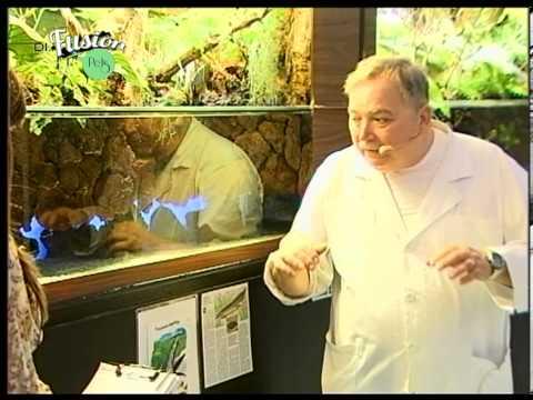 Di.Fusion Pets - Pesci tropicali d'acqua dolce