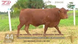 Coro 2022 b4 fiv