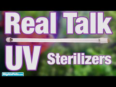 Real Talk With Thomas: UV Sterilizers (Video)