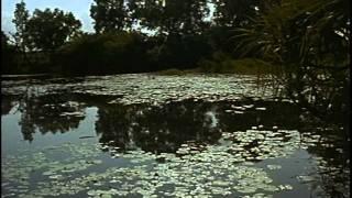 Смотреть онлайн Фильм Жака Ив Кусто: Секреты Австралии