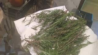 Using The Brown Bag Method Of Drying Herbs