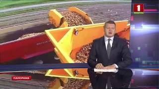Беларусь намерена экспортировать более половины урожая картофеля. Панорама