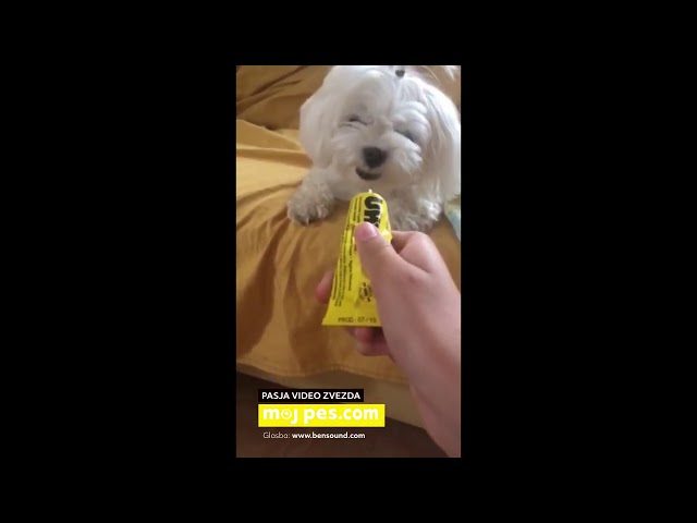 Rozi – Video natečaj 2020 – Revija Moj Pes #Rozi #MojPes