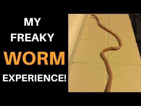 May mga gansa worm