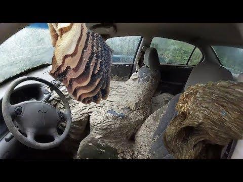 , title : 'WASP NEST VS CAR - Huge wasp nests