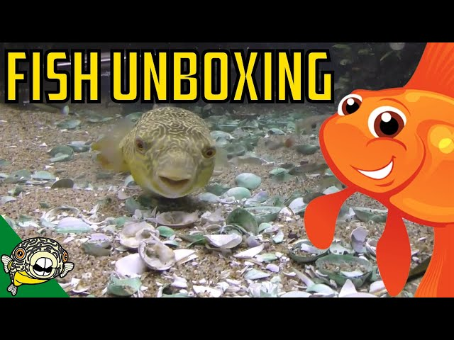 Aquarium Fish Unboxing. Rare Plecos, Puffer Fish, Corydoras, Cardinal Tetras, Rice Fish