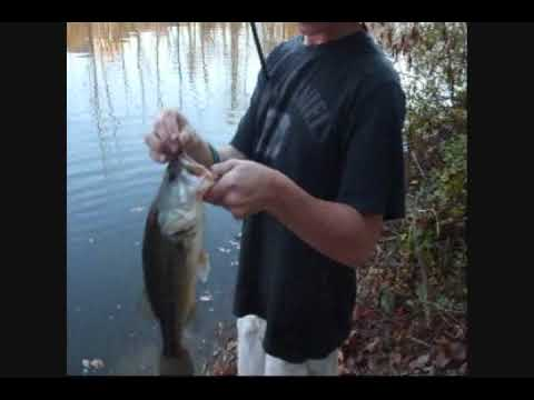 Awsome Fall Bass Fishing At The Pond!