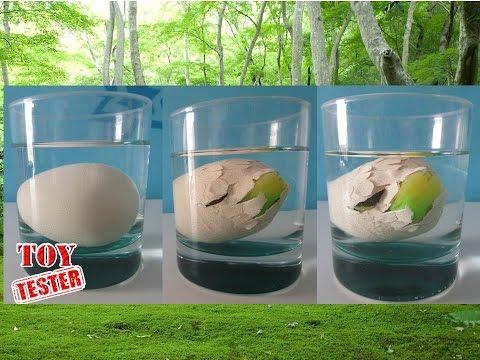 Nacimiento de dinosaurio de juguete | Huevo dinosaurio de juguete | Vídeos de dinosaurios para niños