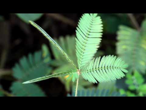 Come si contrae papilloma virus nell uomo