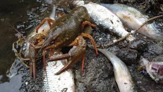 Рыболовные войска в контакте череповец