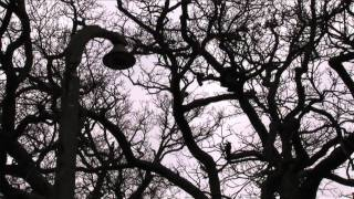 Phoenix X15: episode 1