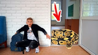Обнаружили живого ПИТОНА в школе!!!Found a live python in school!