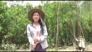 Beautiful Hmong Girls  mos muas tiaj lauj cuab