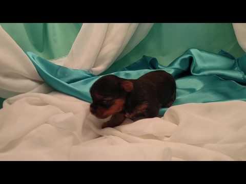 Thyme is a darling little fella