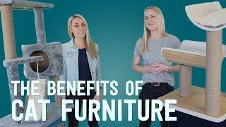 Vets Explain: The Benefits Of Cat Furniture