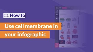 Cell Membrane - Infographic