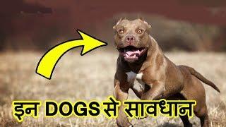 Top 10 MOST Dangerous Dog Breeds in the World (2018) | इन कुत्तों से सावधान