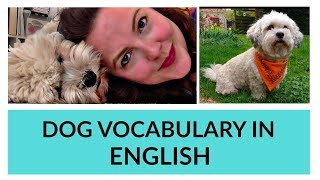 Dog Vocabulary in English (simple basic vocabulary)