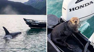 animales  deshacerse de la orca