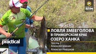 Ловля змееголова в амурской области осенью