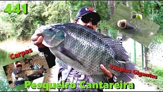 Carpas e grandes Tilápias no Cantareira - Fishingtur na TV 441