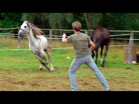 [HD] die nordstory - Der Mann, der die Pferde versteht (Doku)