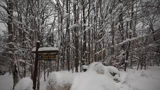 Video: Snowshoeing in Lake Placid