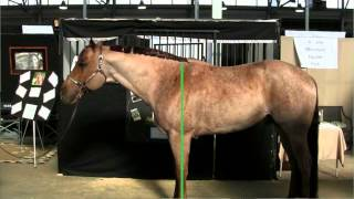 The Basics of Horse Conformation - Purdue YDAE
