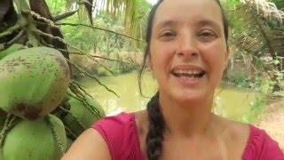 Jak rostou stromy kokosu, jackfruit a papaya v Thajsku I Síla pro život